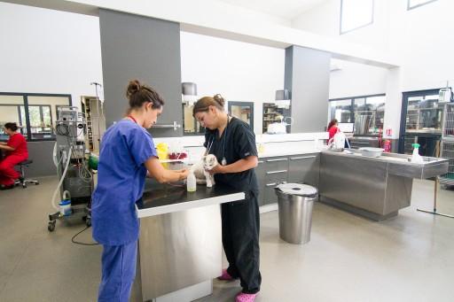 Médecine vétérinaire chez le chien et le chat, Angers, VetRef