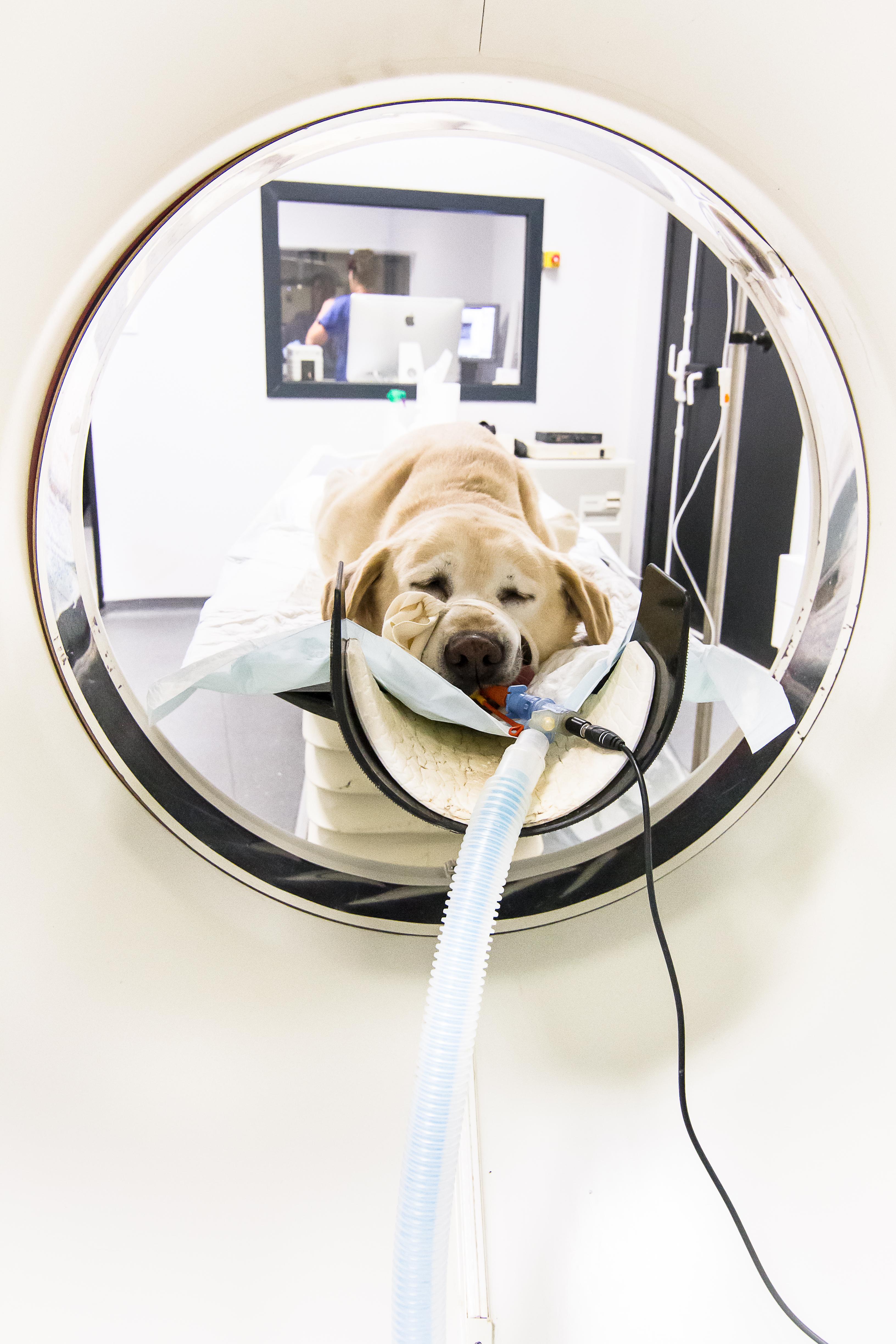 Scanner chez un chien à la clinique VetRef Angers