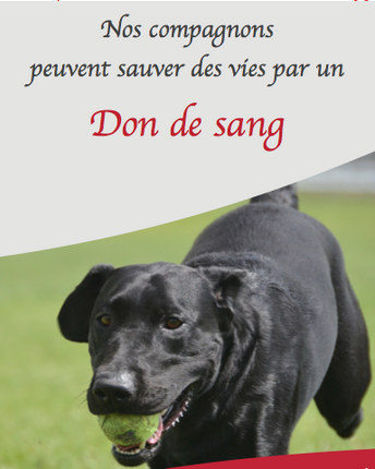 Don du sang chien chat, VetRef, Angers